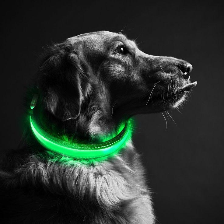 Superisparmio's Post Collare LED  Collare LED per Cani di Sicurezza di Nylon Luminoso Dog Band Ricaricabile lunghezza 40/50cm  A solo 7.00 Invece di 13.99 #oneshotcode  4K8G-L22FQA-6FLNX7   http://amzn.to/2EmQqEC