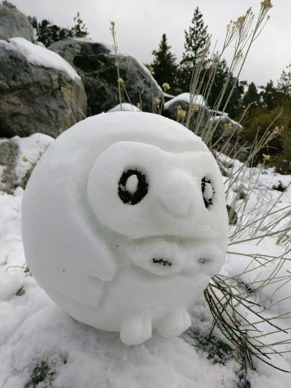 My friend went up to the mountains yesterday and made this Snowlet (Snow Rowlet). : pokemon