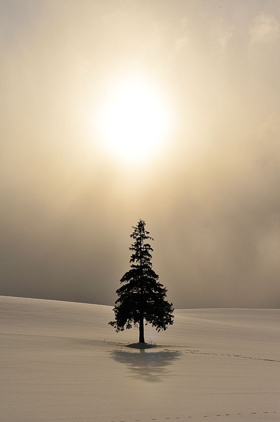 Standing alone does not mean I am alone; it means I am strong enough to handle things all by myself. ~ Unknown, (photo: Hokkaido, Japan)