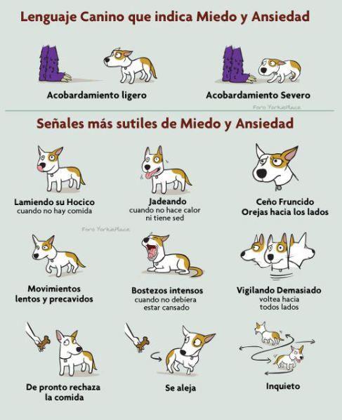 El lenguaje corporal de los perros y gatos.
