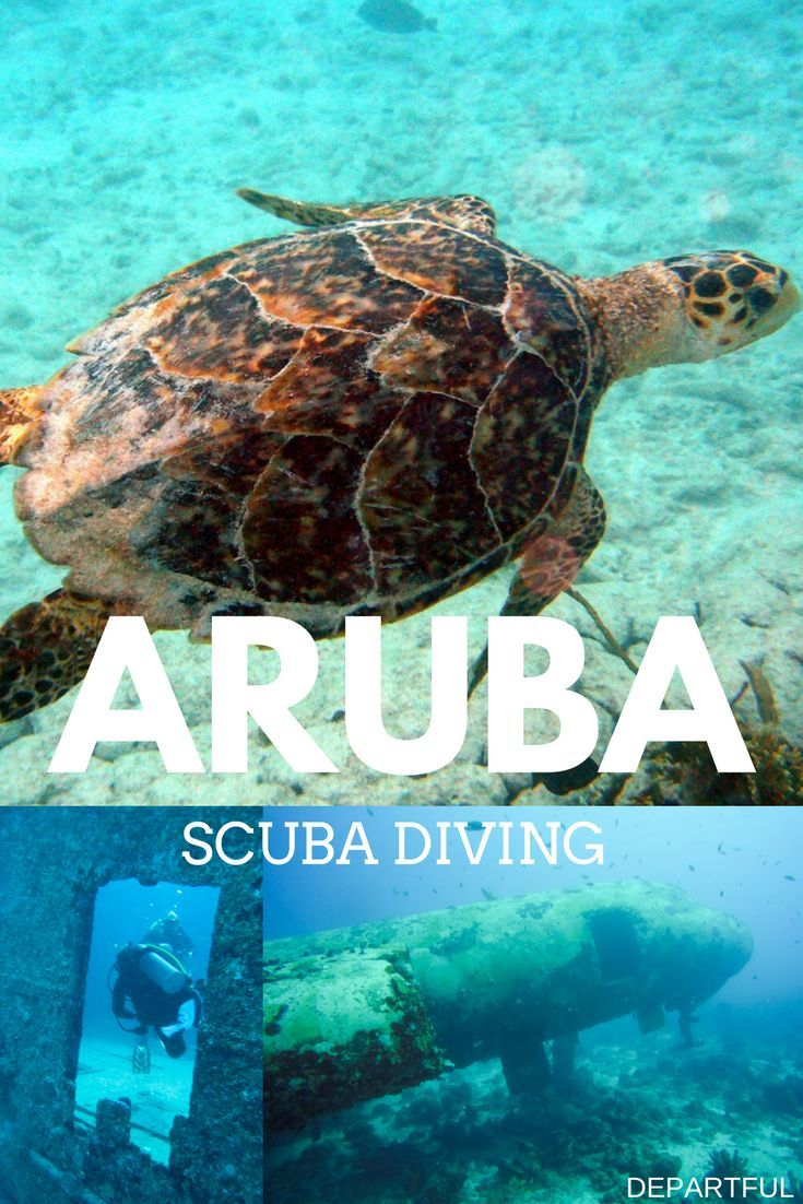Aruba is home to dozens of interesting scuba diving experiences, all easily located within a five to 20 minute boat ride from shore. It's also home to some of the Caribbean's most intriguing and accessible ship and plane wreck sites.