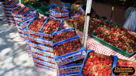 Orlando's Farmers Market at Lake Eola: Eating, shopping and strolling at the city's original outdoor market