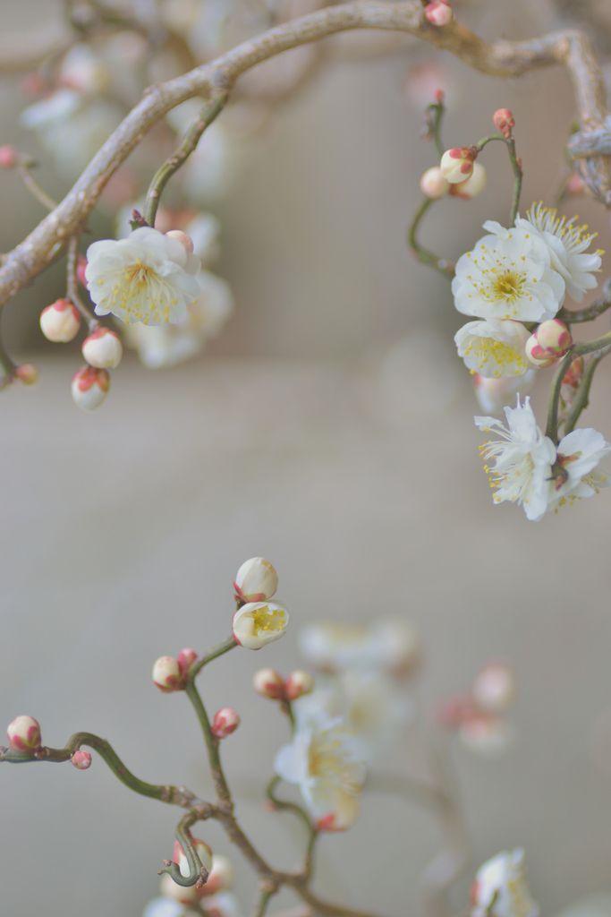 #sakurafeels  #botanist #green #plants #earth #botanical #shampoo #bath #japanese #brand #Japan #body milk #body lotion #skincare #skin #bodylotion #natural #lifestyle #slowliving #nature #organic #made in Japan #inspiration #drink #food #lifestyle http://botanistofficial.com/