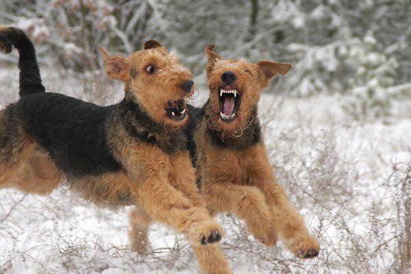 H M Ein Brudertreffen Hunde Ich Liebe Hunde