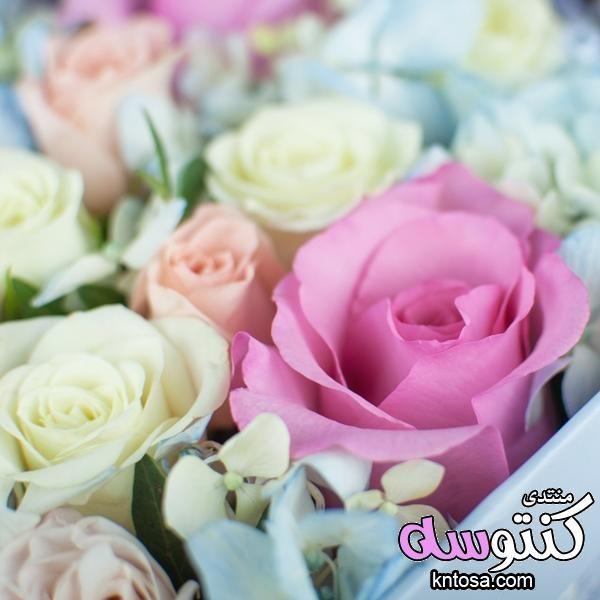 احلى صور ورود 2019 جوده عالية صور زهور منوعة اجمل صور ورد للعشاق ورود رومانسية منتدى كنتوسه Rose Plants Flowers