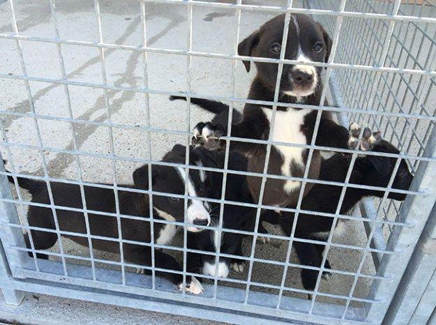 Adopta un perro o un gato del Centro de Protección Animal de Arroyomolinos - Ayuntamiento de Arroyomolinos