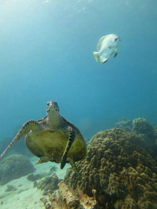Picture by lovebubble social diving - Nosy Be