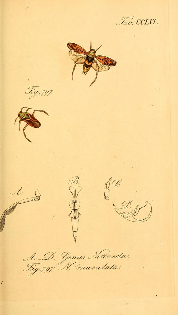 https://www.flickr.com/photos/biodivlibrary/7746525672/sizes/l