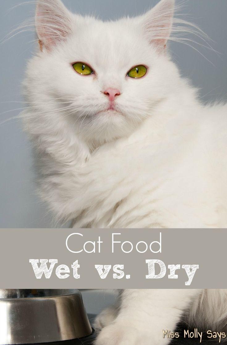 Cat Food Wet Vs Dry Cat Care Best Cat Food Cat Food