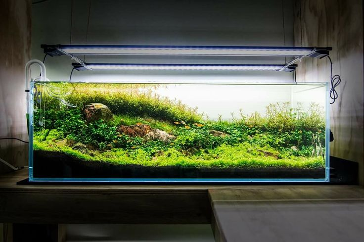 by Nature Aquarium Vancouver