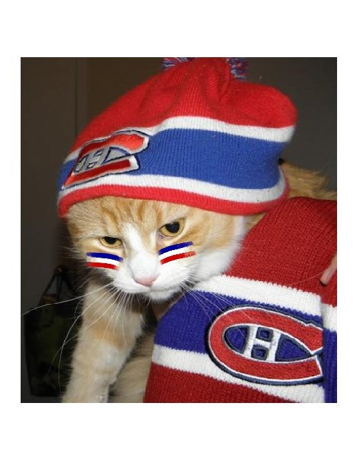 Chat prêt pour le hockey!, par Jim Sykes/ Habs cat ready for winter, submitted by JimSykes