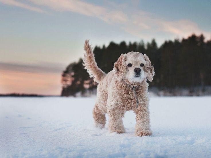 Dog photography - Toast Photos