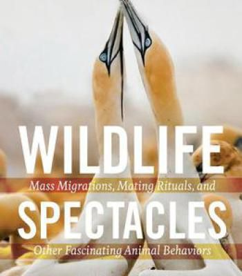 Wildlife Spectacles: Mass Migrations Mating Rituals And Other Fascinating Animal Behaviors PDF