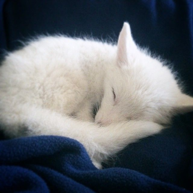 Rylai, a white marble red fox