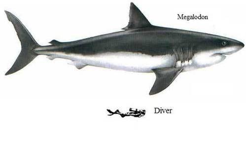 megalodon sharks - Google Search