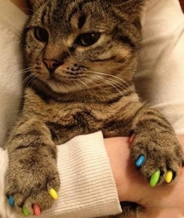 26 Best Cats With Nail Polish Images On Pinterest Nail