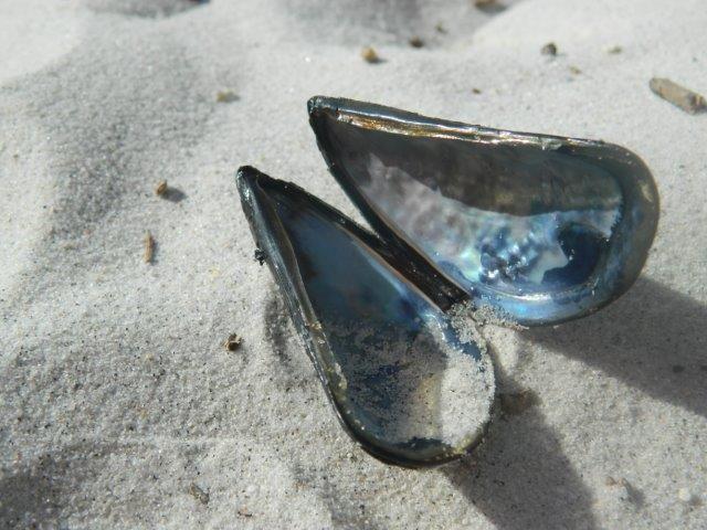 Sea shells - by Daniel Augustyn