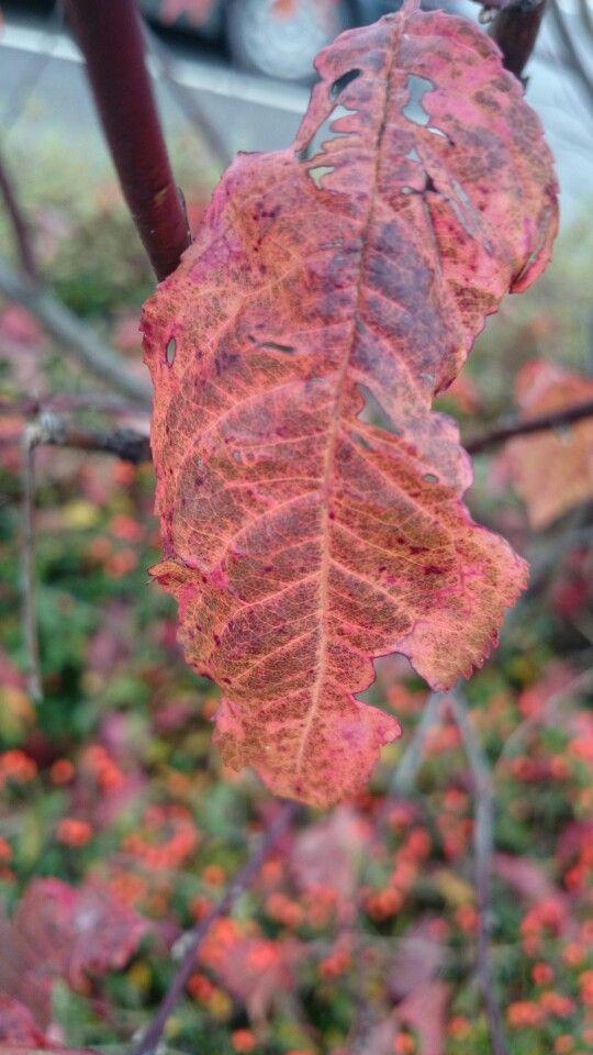 Structured leaf