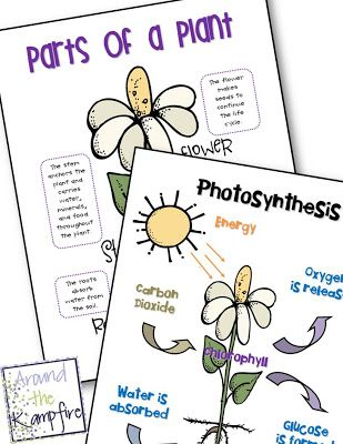 Parts of a plant and photosynthesis anchor charts (freebie)