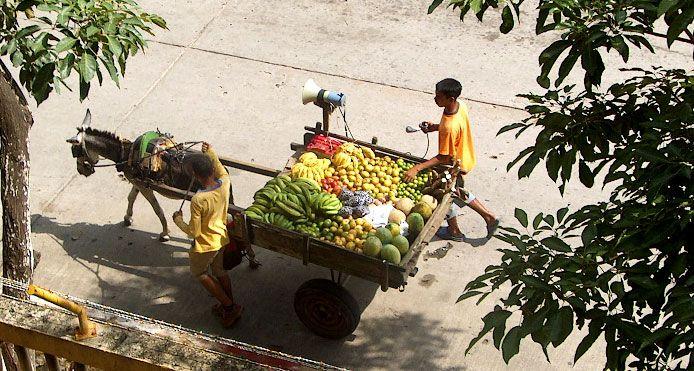 Frutas en altavoz sobre rueda