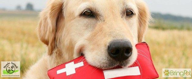 """BringPet e Associazione Culturale Mondo Animali """"Primo soccorso veterinario"""""""