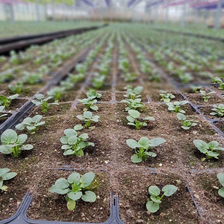 Ute har kylan kommit men i vårt växthus är våren på gång! 🌱🌱🌱🌱🌱#lillahults @lillahults