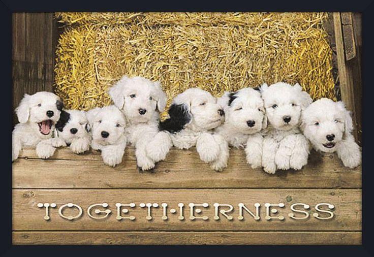 Quadro Decorativo Poster Dogs Filhotes Brancos com Manchas Pretas 94x64cm - Decore Pronto