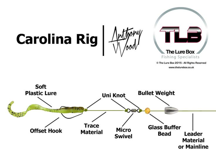 Carolina Rig Diagram