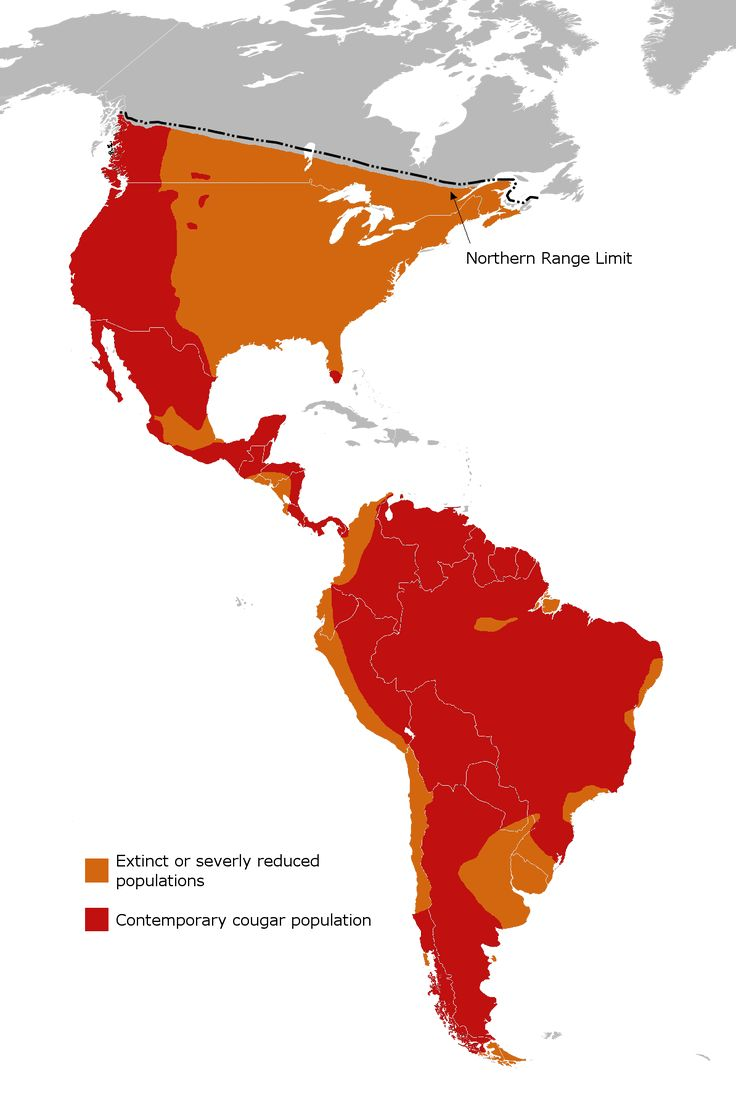Best Images About Maps  Flags North  South America On - North south america map outline