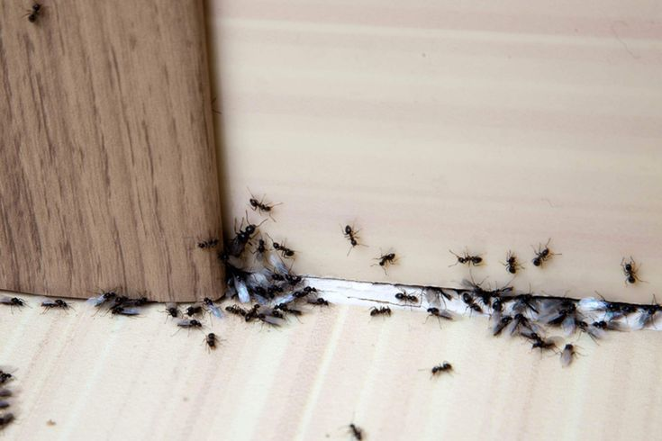 Got an ant problem? Here's how to get rid of ants using 13 common items you already own—and keep the pests away for good.
