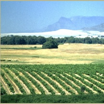 Malmesbury, South Africa (Spice Route)