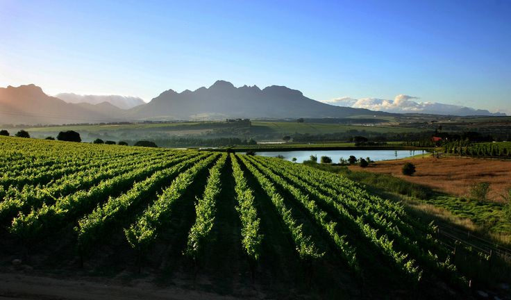 Exploring Cape Winelands: nestled in a pastoral valley about an hour from Cape Town, Cape Winelands is a world-renowned destination that produces top class vintages.   Rent a car—or, better yet, a vintage vehicle—and wind leisurely through scenic back roads, past charming farmhouses and wine estates, and take advantage of opportunities to stop and taste along the way.