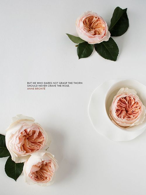 """""""But he who dares not grasp the thorn should never crave the rose."""" - Anne Brontë"""