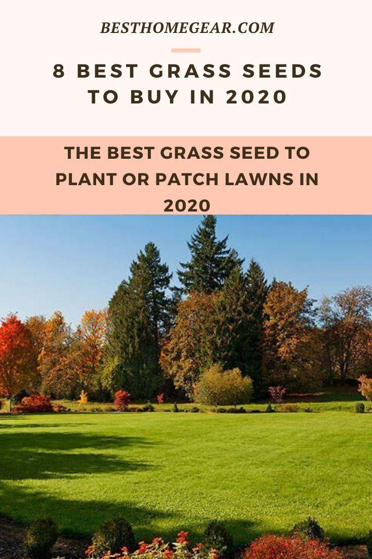 8 Best Grass Seeds Reviews For 2020 Best Grass Seed Grass Seed Benefits Of Gardening