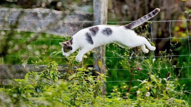 Partij voor de Dieren wil totaalverbod op kattenjacht | NU - Het laatste nieuws het eerst op NU.nl