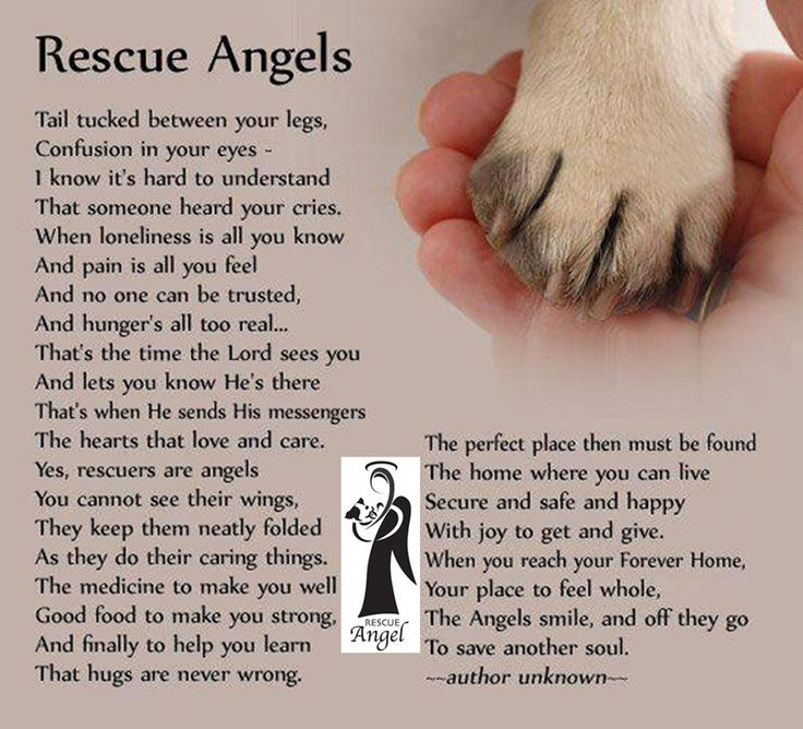 Dog Angel Quotes: Poem Dedicated To The Men And Women Who