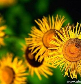 natural.flower-wallpaper