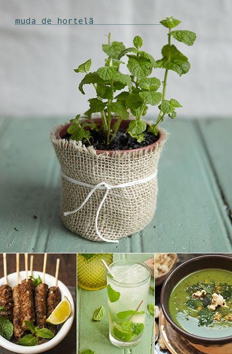 Ervas frescas: Hortelã - Versátil, a hortelã é melhor se usada fresca. Ela vai bem em saladas, legumes cozidos, balas, licores, drinques e sobremesas. Algumas receitas: Kafta no espeto com molho de hortelã, Mojito, Sopa de ervilha fresca com hortelã e pipoca.