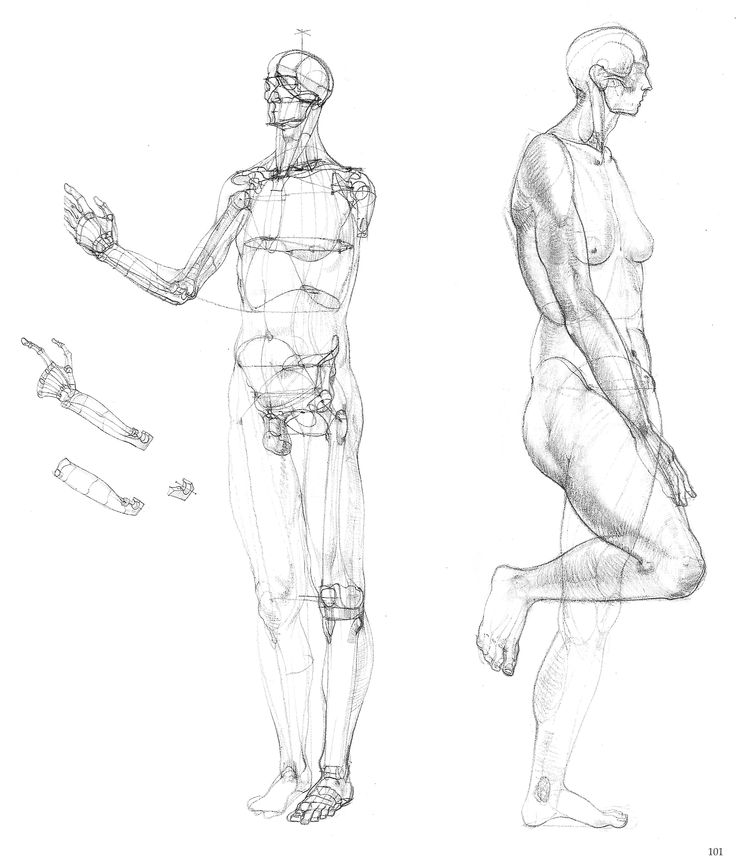 483 best Analytically figure drawing images on Pinterest | To draw ...