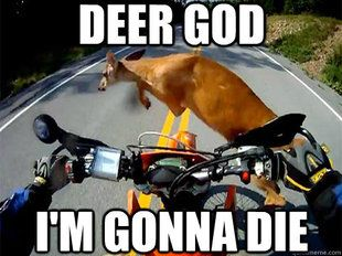 db0900df0116a6adffdcfb0c26a590b5 motorcycle humor deer motorcycle memes funny motorcycle memes 21 motorcycle quotes