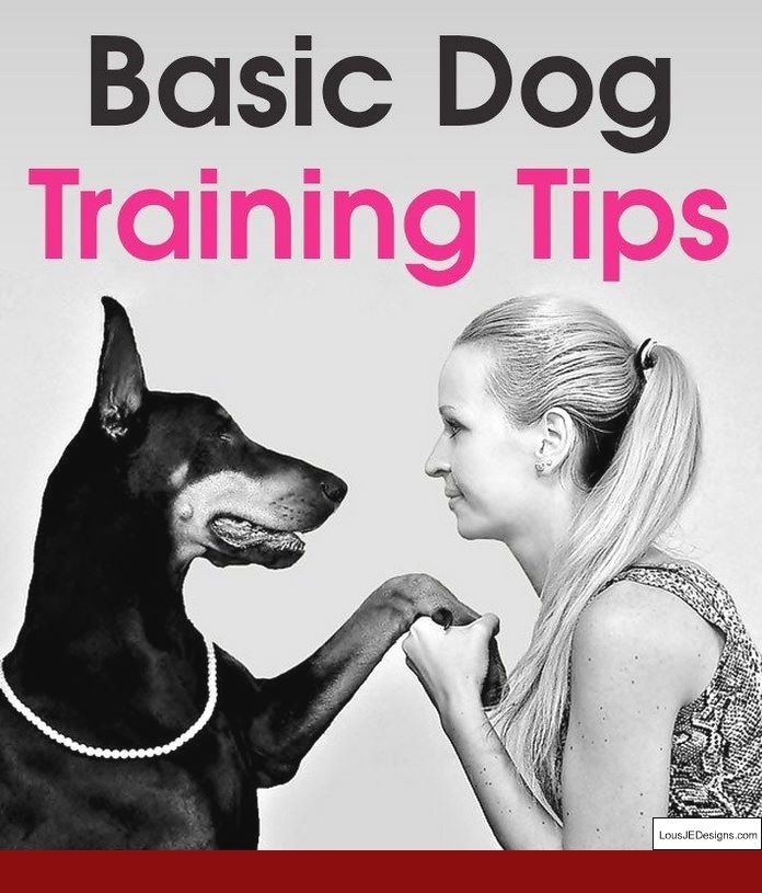 How To Train My Dog To Stay Calm And Pics Of How To Train A 1 Year