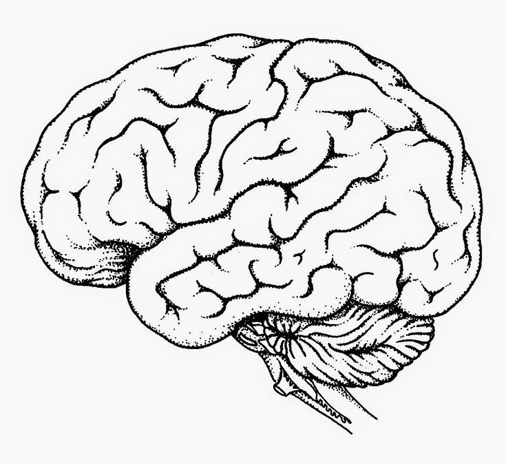 Blank Brain Diagram   Blank Brain Diagram Blank Brain