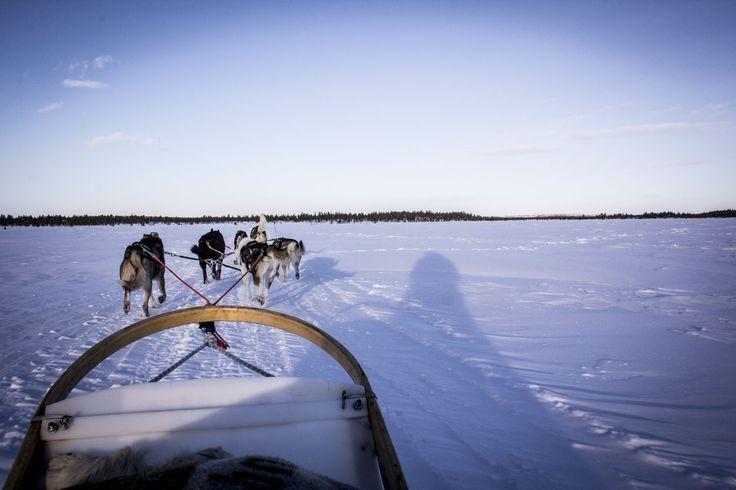 Notre expérience en safari husky en Laponie Finlandaise en plein hiver arctique à travers lacs gelés et forêts, avec tous nos conseils pour en profiter !