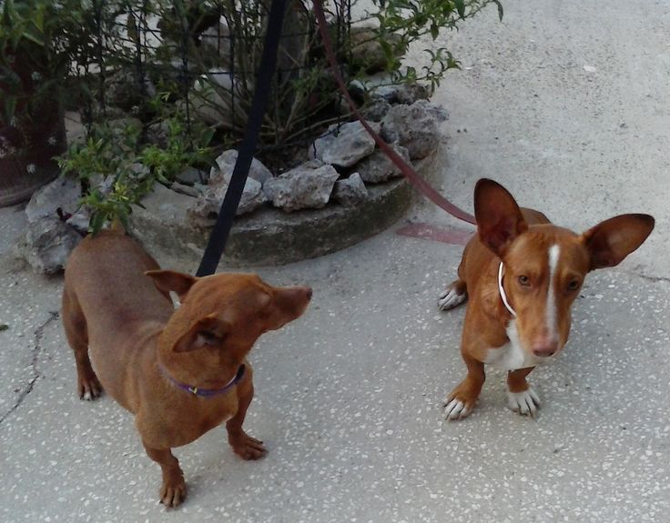 Dogs looking for adopting family!