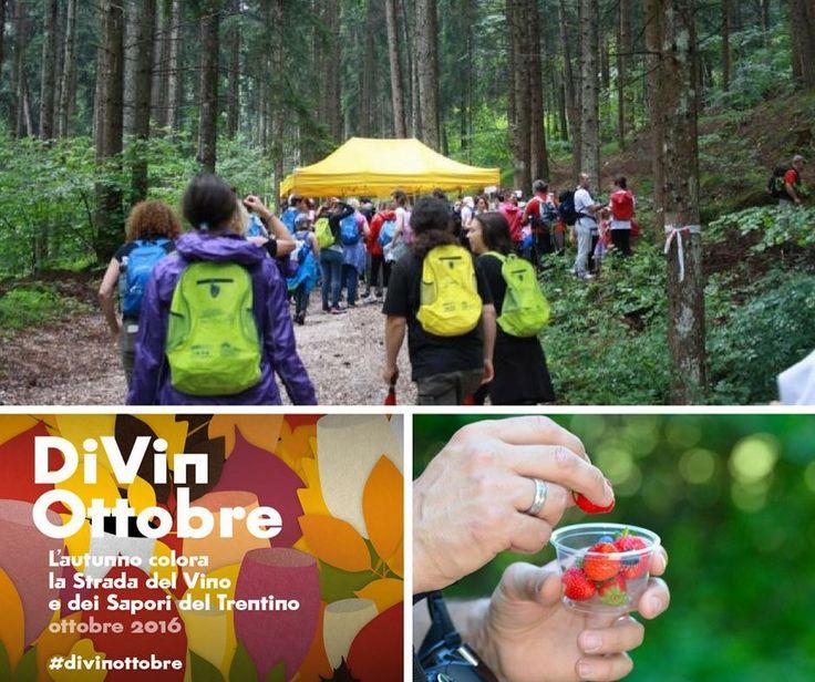 """Domenica 9 ottobre si terrà a Civezzano """"il cucchiaio dell'Argentario"""" 11 km alla scoperta di piccoli borghi e del bosco. Per maggiori info visita: http://bit.ly/cucchiaioargent  #slowtrek #trentino #civezzano #autunno"""