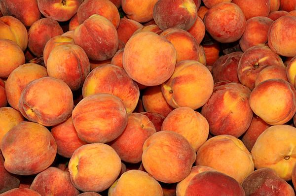 Peaches at Union Square Farmers Market NYC.  Food photography by Diane Greene Lent