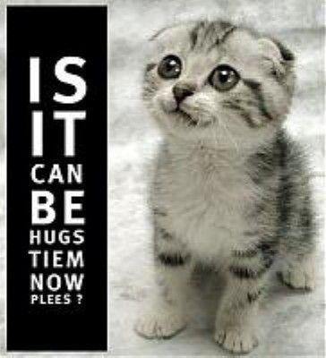 Is it can be hugs tiem now plees?: Cat Hugs, Funny Cat Photos, Sweet, Hugs Time, Funny Animal, Kittens, Glitter, Kitty, Berries