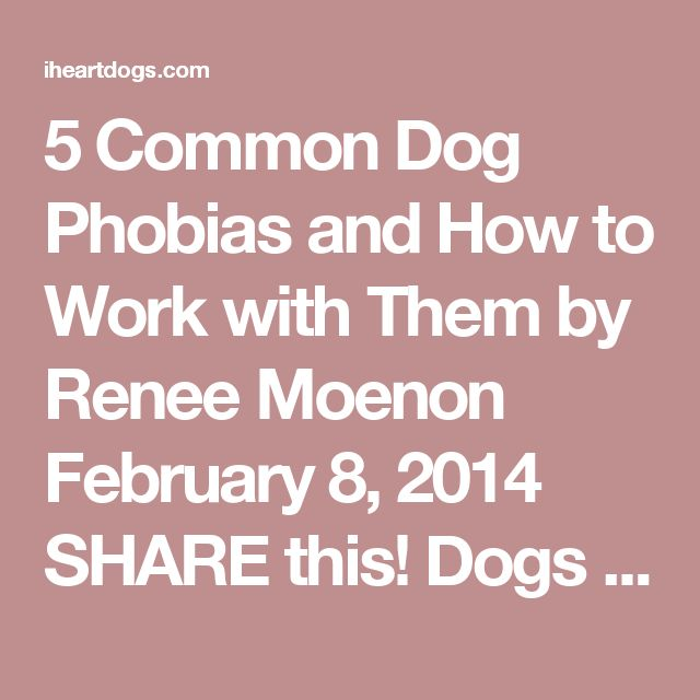 What are some of the common phobias and their meanings?