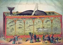 Illustration of a large travelling circus aquarium filled with sharks, alligators, seals, octopus, narwhal whale and a spouting sperm whale, lithograph, 1873.