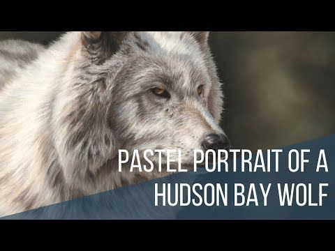 Pastel portrait of a Hudson Bay wolf. Time lapse video. - YouTube